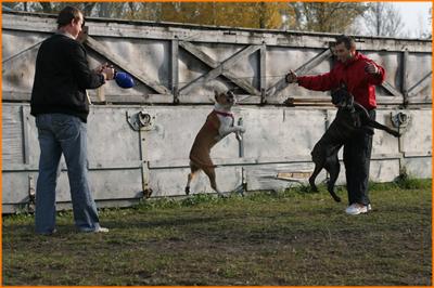 Šunų sportas