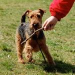 Šeši paklusnaus šuns įgūdžiai. Kramtymas, graužimas