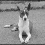 Šuns agresija. Pagarbaus elgesio protokolai