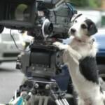Šuns mokymo būdai. Elgesio formavimas arba šeipingas