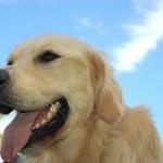 Šuns skatinimas, masinimas ir … kyšininkavimas ? 2 dalis
