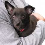 Patarimai Superšeimininkams #4: kaip elgtis su bailiu šunimi
