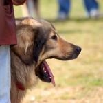 Asmeninių šunų dresūros treniruočių nauda