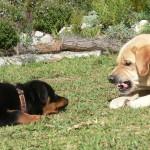 """""""Dominavimo"""" frazės naudojimas, kad paaiškinti šuns elgesį, jau nėra tinkamas"""