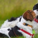 Bendras paklusnumas – šunų dresūros treniruotės