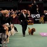 Šunų parodos etiketo taisyklės