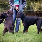 Šuniuko socializacija