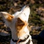 Šuo, kuris bijojo eiti per tiltą arba apie baimes