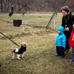 Jaunų šuniukų tinkamas socializavimas su žmonėmis