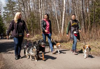 pažangių šunų grupė