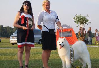 šuns ruošimas parodoms