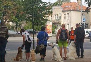 šunų treniruotės mieste