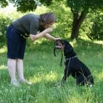 Ar šuo – Jūsų namų lyderis ?
