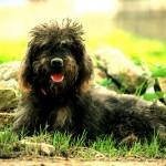 Nedidelis šunelis: net ir jį reikia auklėti