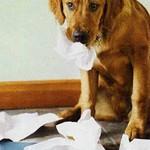 Šeši paklusnaus šuns įgūdžiai. Atsiskyrimas, išsiskyrimas su šeimininku