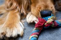 Šuo ir virvė
