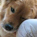 Ko verta šuns meilė?
