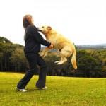 Kaip atpratinti šunį šokinėti ant žmonių