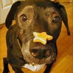 Šunų skatinimais maistu ir skanėstais