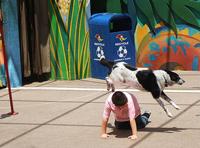 sudetingas-suns-triukas