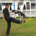 Geras gyvūnų treneris (1 dalis)
