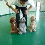 Geras gyvūnų treneris (2 dalis)