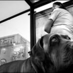 Šuns ir šeimininko santykių keitimas (2 dalis)