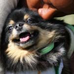 Šuns ir šeimininko santykių keitimas (1 dalis)
