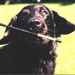 """""""Canis"""" klikerio pamokos. 3. Taikinio (targeto) lazdelė"""