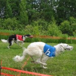 Paklusnunumo varžyboms mažiausiai tinkantys šunys