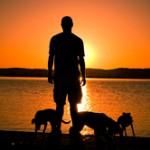 Kokio lyderio reikia Jūsų šuniui ?