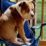 Elgesio kvadrantas – atsakymas, kaip elgiatės su šunimi