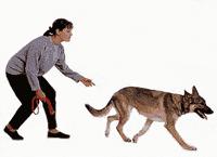 suns-demesingumas