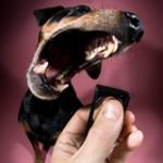 """""""Canis"""" klikerio pamokos. 10. Klikeris ir šuns viliojimas"""