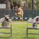 """""""Canis"""" klikerio pamokos. 9. Mokymasis su trukdžiais"""