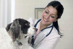 veterinarijos-klinikos