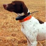 Kaip surasti pabėgusį šunį