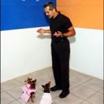 """""""Canis"""" klikerio pamokos. 11. 21 patarimas efektyviam darbui su klikeriu"""