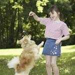 Šuns mokymo būdai. Viliojimas