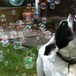 6 priežastys, kodėl šuo kanda