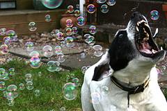 suo-ir-burbulai