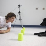 Mokslas apie šuns mąstymą