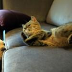 Šunys turi didesnes smegenis nei katės, nes yra labiau socialūs