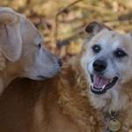 9 šuns dominavimo mitai. 2 dalis