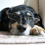 """Paskaitos """"Šuns auklėjimo abėcėlė"""""""