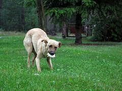suns-baime