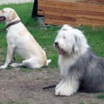 Šuns savikontrolės ugdymas