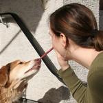 Šuns skatinimas, masinimas ir … kyšininkavimas ? 4 dalis