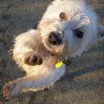 Šuns skatinimas, masinimas ir … kyšininkavimas ? 3 dalis