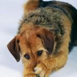 Šunų kūno kalba. II dalis